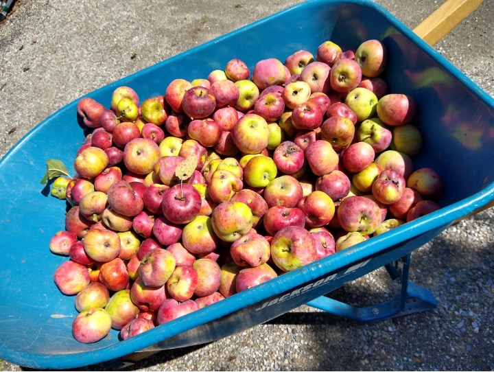 Letters from the Garden: Apple Time